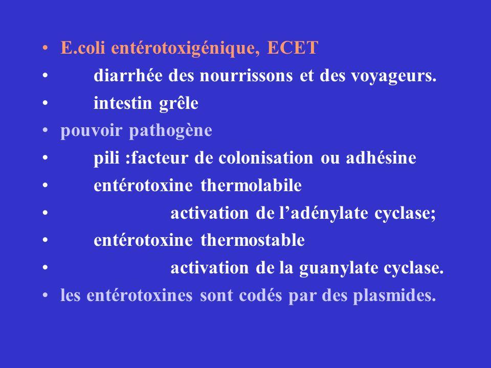 E.coli entérotoxigénique, ECET diarrhée des nourrissons et des voyageurs. intestin grêle pouvoir pathogène pili :facteur de colonisation ou adhésine e