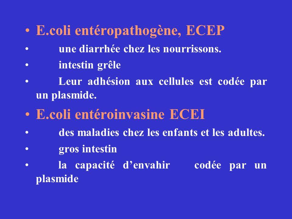 E.coli entéropathogène, ECEP une diarrhée chez les nourrissons.