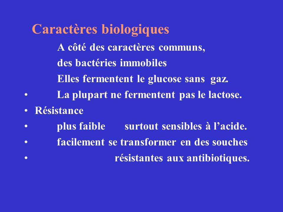 Caractères biologiques A côté des caractères communs, des bactéries immobiles Elles fermentent le glucose sans gaz. La plupart ne fermentent pas le la
