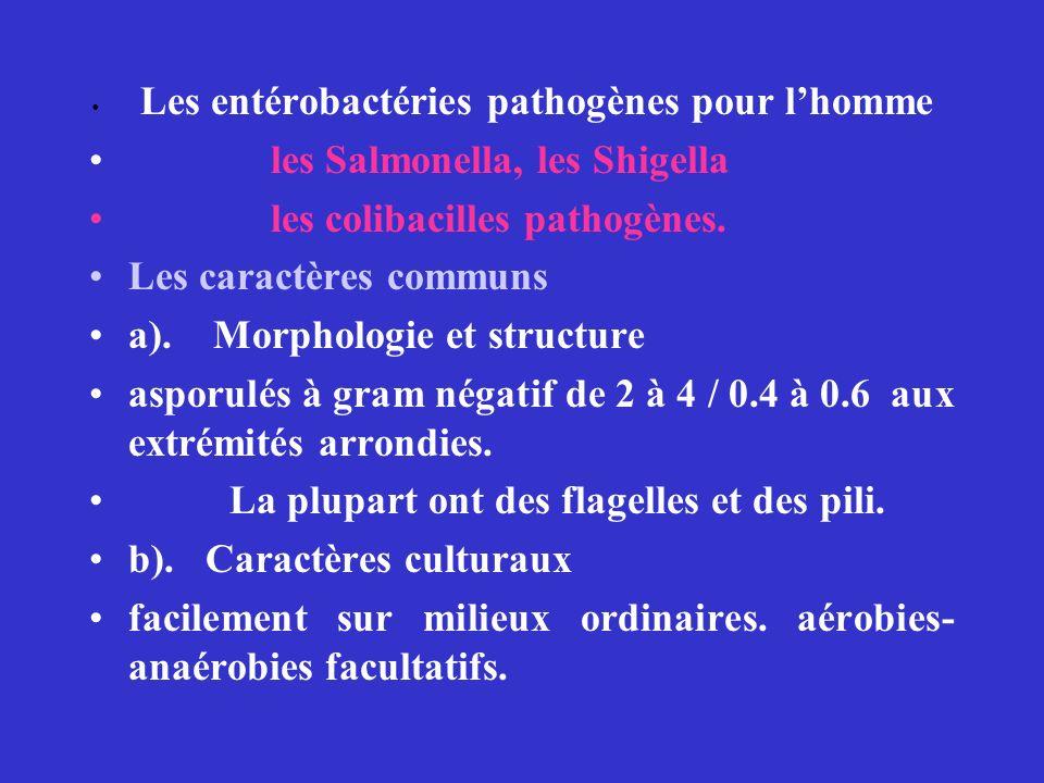 Les entérobactéries pathogènes pour lhomme les Salmonella, les Shigella les colibacilles pathogènes.