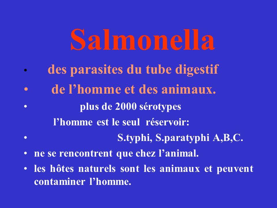 Salmonella des parasites du tube digestif de lhomme et des animaux. plus de 2000 sérotypes lhomme est le seul réservoir: S.typhi, S.paratyphi A,B,C. n