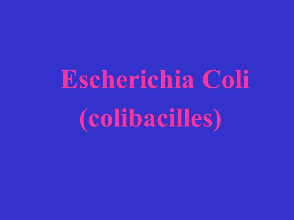 Escherichia Coli (colibacilles)