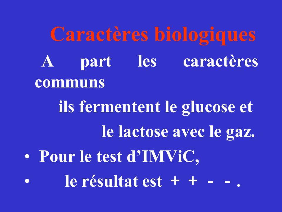 Caractères biologiques A part les caractères communs ils fermentent le glucose et le lactose avec le gaz. Pour le test dIMViC, le résultat est.