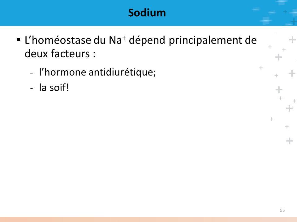55 Sodium Lhoméostase du Na + dépend principalement de deux facteurs : - lhormone antidiurétique; - la soif!