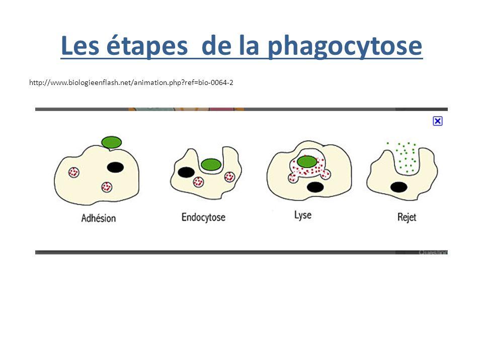 B) une production dAC anti VIH - Le Test ELISA (Enzyme Linked ImmunoSorbant Assay) Principe du TEST (=> http://www.phonat.fr/charger/ElisatestV2.swf) http://www.phonat.fr/charger/ElisatestV2.swf Q2 p.130 en justifiant les résultats… -Le Test Western BLOT: doc 22 p.131 Description du Test (doc 6b p122 possible) http://www.ac-nancy-metz.fr/enseign/svt/eleve/prodelev/western/anim_west.htm -Commentaires (avec doc graphique) Bilan CHAP I (avec graphique) sujets de type BAC