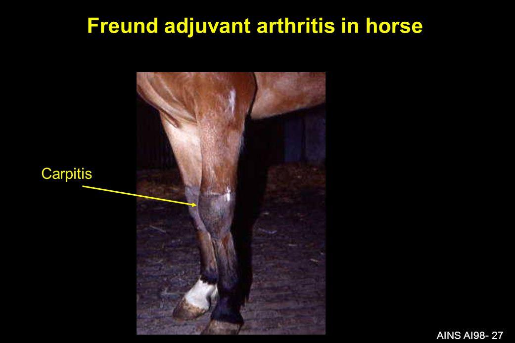AINS AI98- 27 Freund adjuvant arthritis in horse Carpitis
