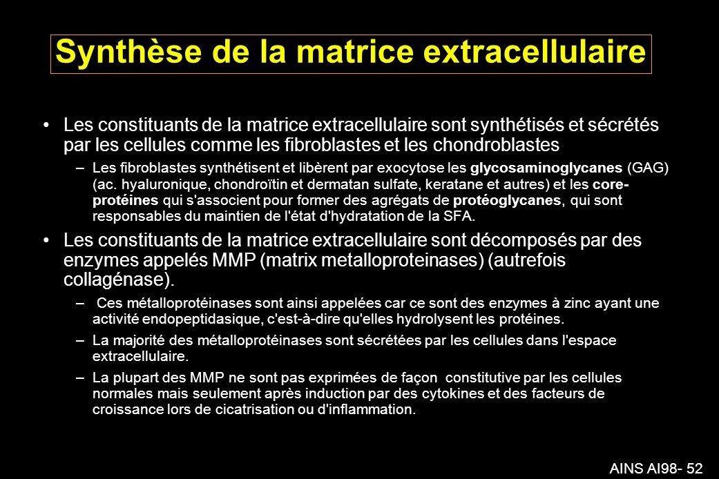 AINS AI98- 52 Synthèse de la matrice extracellulaire Les constituants de la matrice extracellulaire sont synthétisés et sécrétés par les cellules comme les fibroblastes et les chondroblastes –Les fibroblastes synthétisent et libèrent par exocytose les glycosaminoglycanes (GAG) (ac.