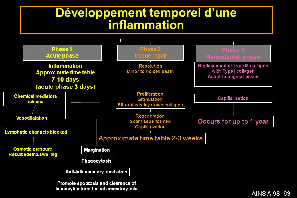 AINS AI98- 63 Développement temporel dune inflammation Phase 1 Acute phase Phase 2 Tissue repair Phase 3 Remodeling phase Inflammation Approximate tim