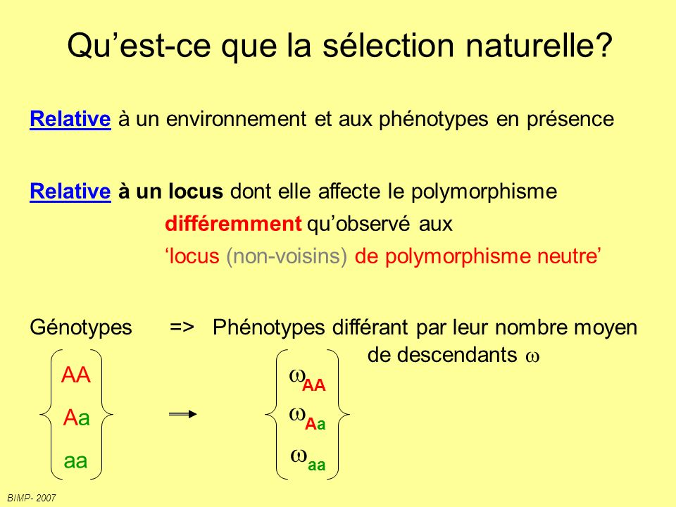 BIMP- 2007 Différentes formes de sélection Chromosomes homologues (haplotype) mutations neutres mutations sélectionnées