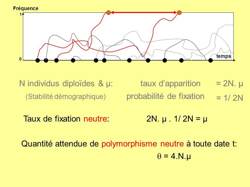 quantifier lattendu neutre de polymorphisme de deux manières Test de neutralité de Tajima utilise le nombre S de sites polymorphes dans léchantillon S utilise le nombre moyen de mutations entre deux haplotypes D = - S - S Var() ½ D < 0 sélection positive (ou goulot détranglement) D > 0 sélection balancée (ou expansion)