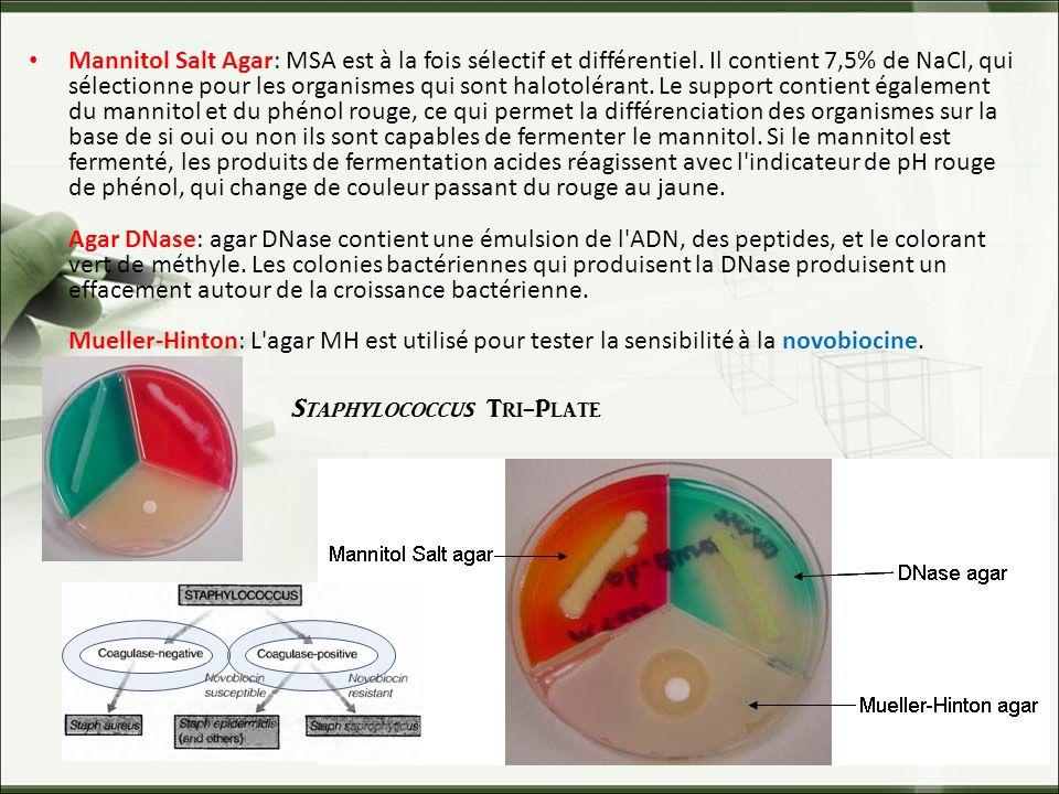 Staphylococcus Tri-Plate Mannitol Salt Agar: MSA est à la fois sélectif et différentiel.