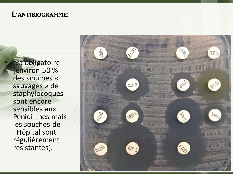 Lantibiogramme: est obligatoire (environ 50 % des souches « sauvages » de staphylocoques sont encore sensibles aux Pénicillines mais les souches de l Hôpital sont régulièrement résistantes).