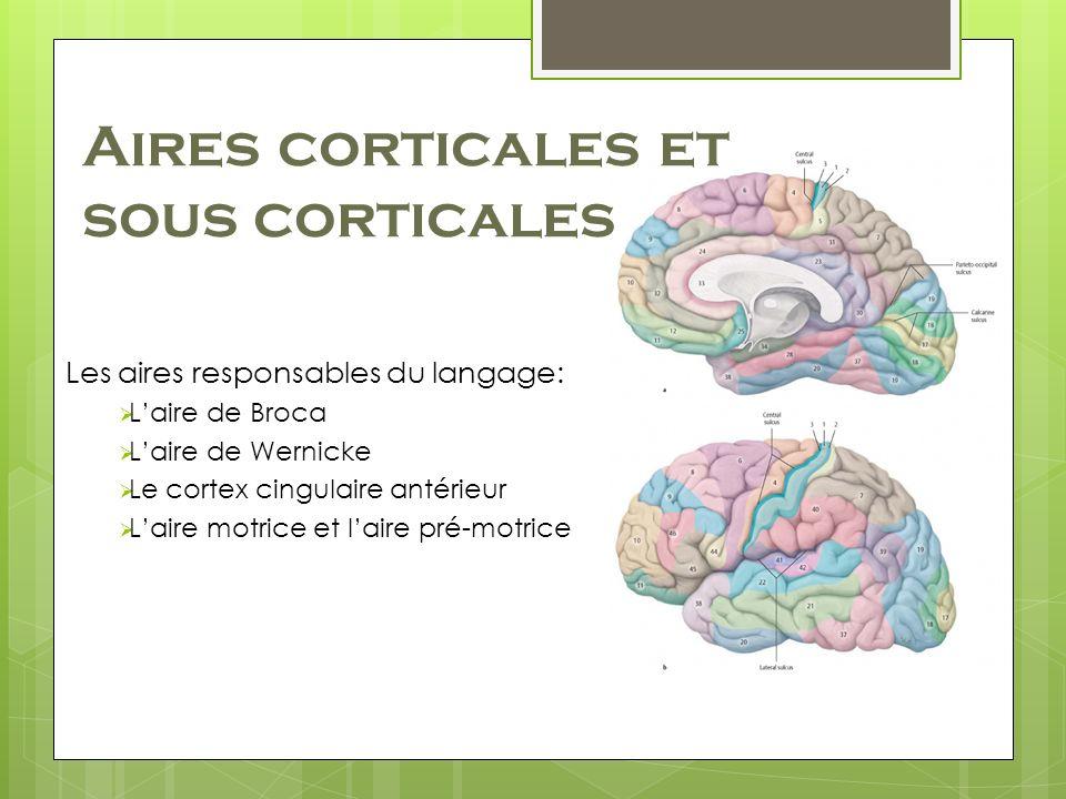 Aires corticales et sous corticales Les aires responsables du langage: Laire de Broca Laire de Wernicke Le cortex cingulaire antérieur Laire motrice et laire pré-motrice