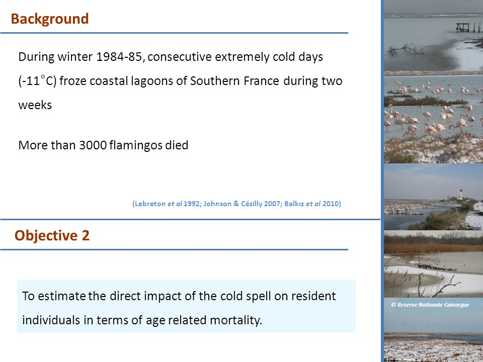 Background © Reserve Nationale Camargue To estimate the direct impact of the cold spell on resident individuals in terms of age related mortality. Obj
