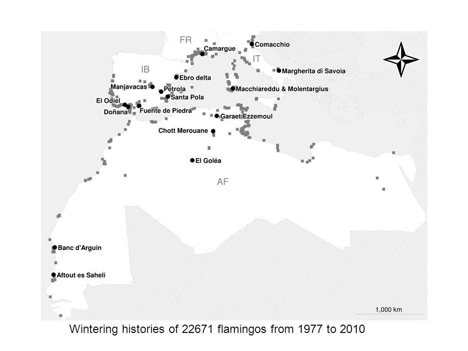 Wintering histories of 22671 flamingos from 1977 to 2010