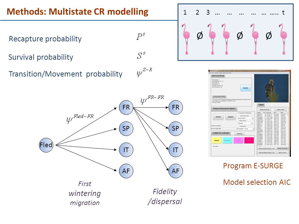 Recapture probability Program E-SURGE Survival probability Methods: Multistate CR modelling Ø 1 2 3 … … … … … ….. t ØØ Fled FR SP IT AF FR SP IT AF Tr