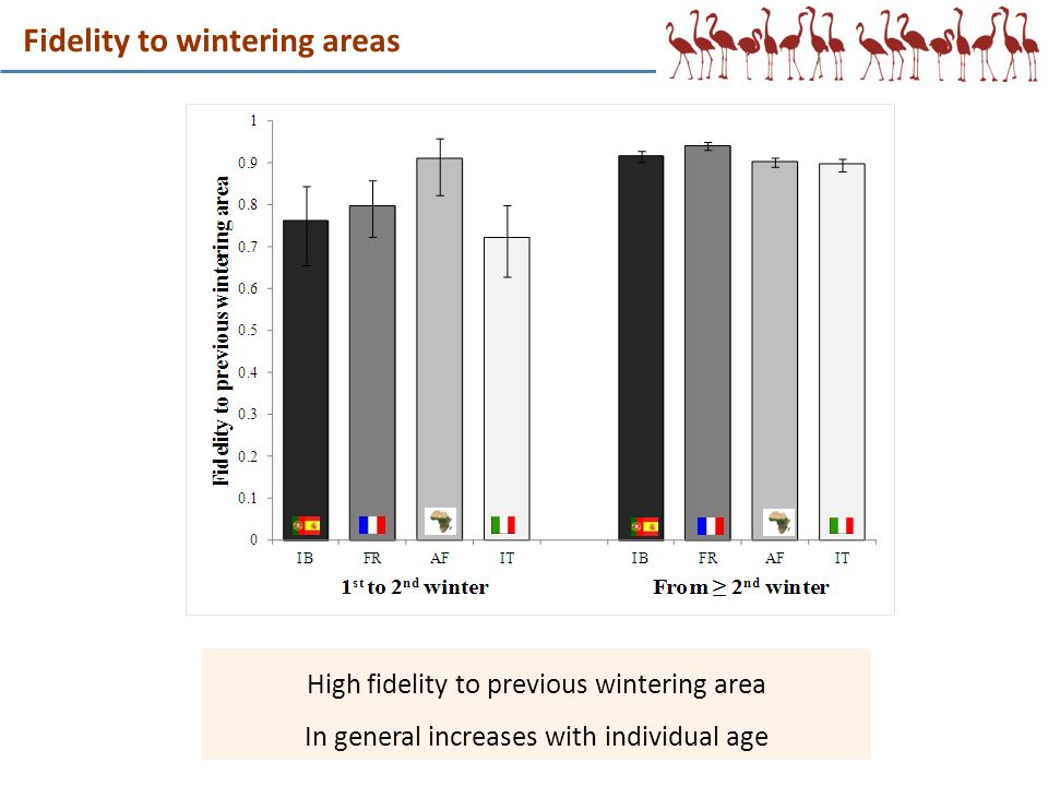 Fidelity to wintering areas High fidelity to previous wintering area In general increases with individual age