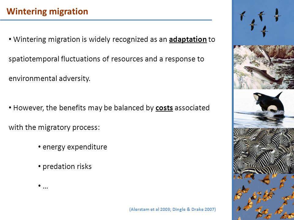 Wintering migration is widely recognized as an adaptation to spatiotemporal fluctuations of resources and a response to environmental adversity. Howev