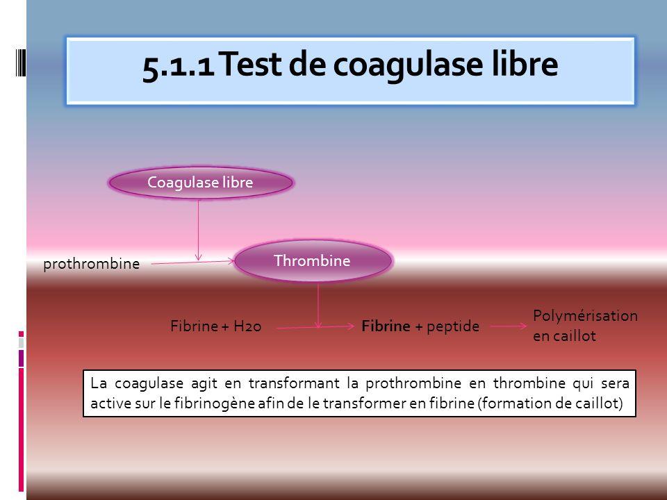 Coagulase libre + Coagulase libre - Plasma (0,5 ml)+ bactérie (0,5 ml) Coagulation: fibrinogène transformé en fibrine + peptides.