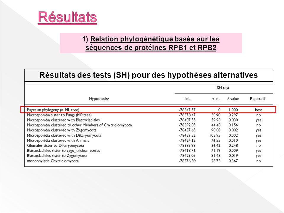 Résultats des tests (SH) pour des hypothèses alternatives 1) Relation phylogénétique basée sur les séquences de protéines RPB1 et RPB2