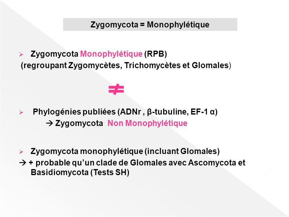 Zygomycota Monophylétique (RPB) (regroupant Zygomycètes, Trichomycètes et Glomales) Phylogénies publiées (ADNr, β-tubuline, EF-1 α) Zygomycota Non Mon