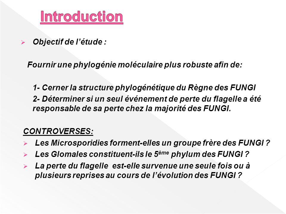 Objectif de létude : Fournir une phylogénie moléculaire plus robuste afin de: 1- Cerner la structure phylogénétique du Règne des FUNGI 2- Déterminer s