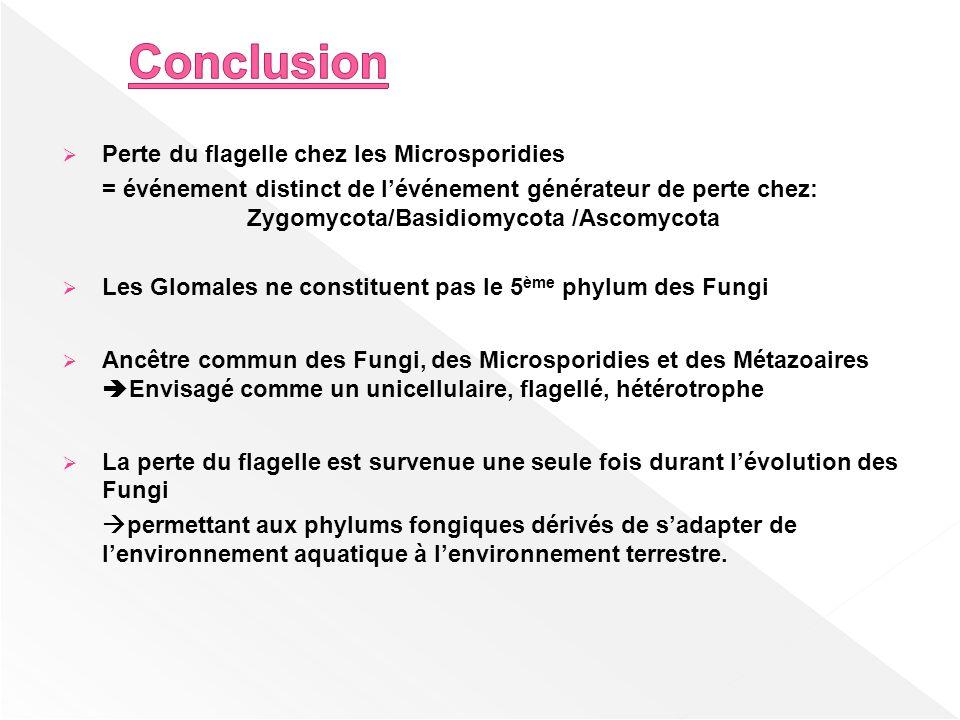 Perte du flagelle chez les Microsporidies = événement distinct de lévénement générateur de perte chez: Zygomycota/Basidiomycota /Ascomycota Les Glomal