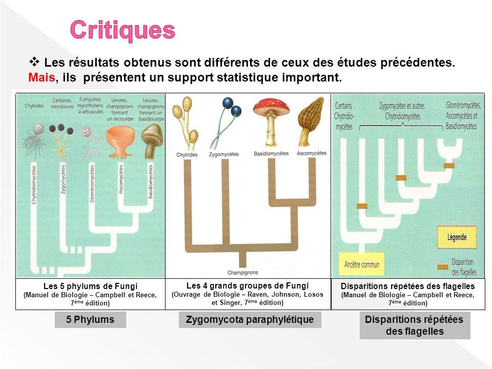 Les résultats obtenus sont différents de ceux des études précédentes. Mais, ils présentent un support statistique important. Les 5 phylums de Fungi (M