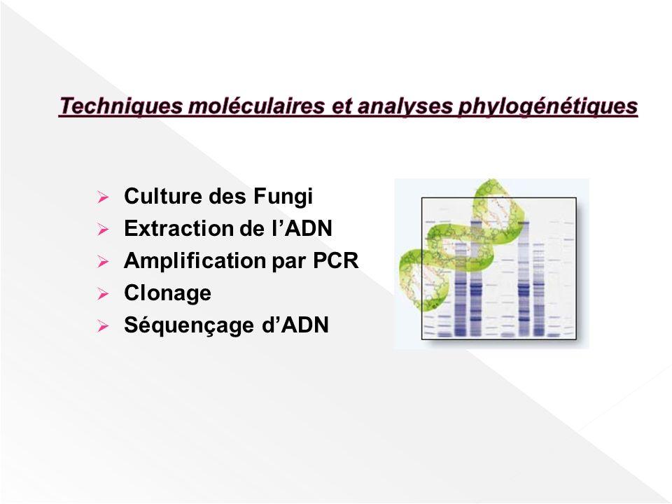 Culture des Fungi Extraction de lADN Amplification par PCR Clonage Séquençage dADN