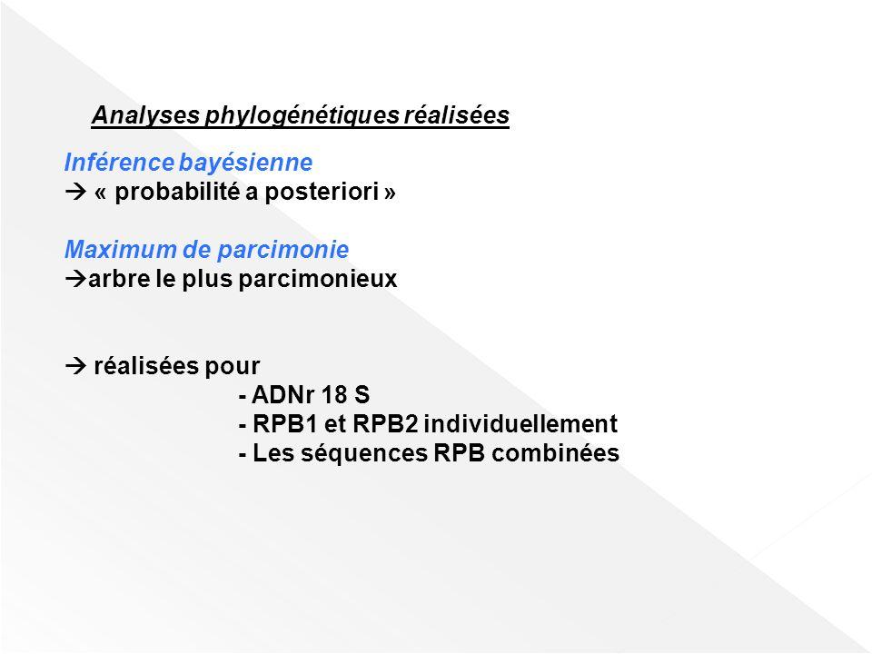 Choix de larbre le plus parcimonieux et validation de la structure phylogénétique proposée Programmes, tests et Outils statistiques utilisés Clustal X PAUP*4.0b10 (et les tests dhomogénéité par paires) AIC (Akaike Information Criterion) MODELTEST 3.7 MrBayes v3.1 MCMC (Markov Chain Monte Carlo) TREE-PUZZLE 5.0 Test SH (Shimodaira-Hasegawa)