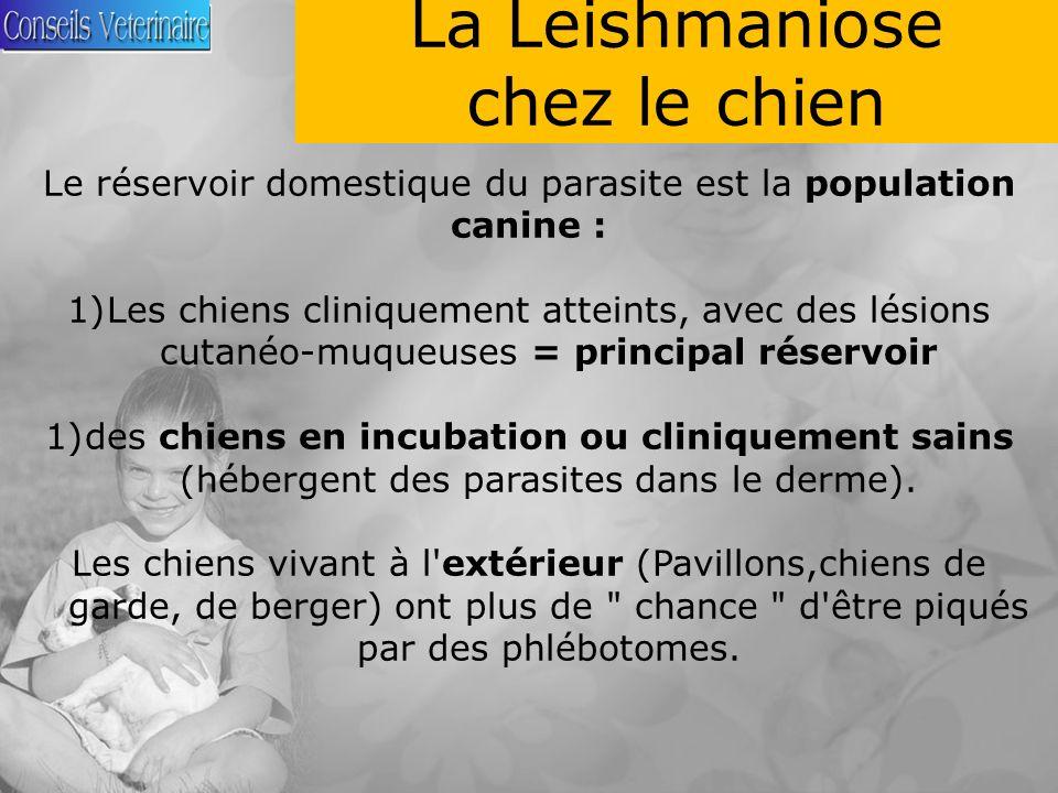 La Leishmaniose chez le chien Le réservoir domestique du parasite est la population canine : 1)Les chiens cliniquement atteints, avec des lésions cutanéo-muqueuses = principal réservoir 1)des chiens en incubation ou cliniquement sains (hébergent des parasites dans le derme).