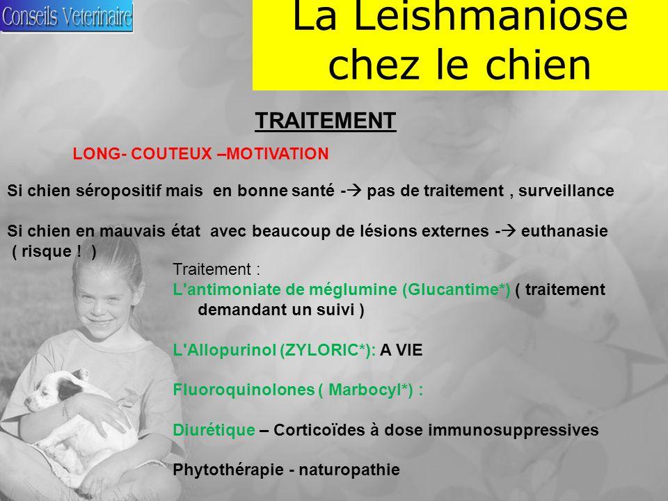 La Leishmaniose chez le chien TRAITEMENT LONG- COUTEUX –MOTIVATION Si chien séropositif mais en bonne santé - pas de traitement, surveillance Si chien en mauvais état avec beaucoup de lésions externes - euthanasie ( risque .