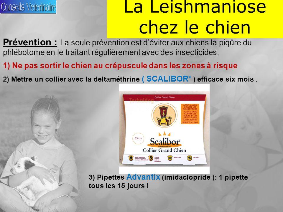 La Leishmaniose chez le chien Prévention : La seule prévention est déviter aux chiens la piqûre du phlébotome en le traitant régulièrement avec des insecticides.