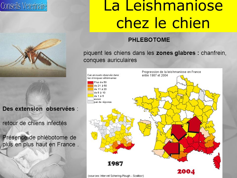 La Leishmaniose chez le chien Repartition de la leishmaniose
