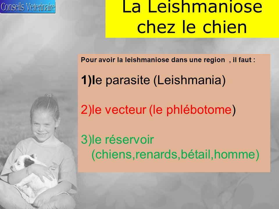 La Leishmaniose chez le chien Pour avoir la leishmaniose dans une region, il faut : 1)le parasite (Leishmania) 2)le vecteur (le phlébotome) 3)le réservoir (chiens,renards,bétail,homme)