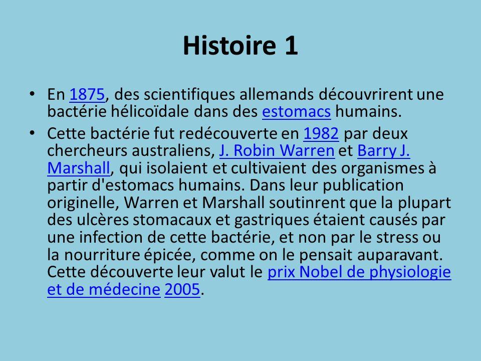Histoire 1 En 1875, des scientifiques allemands découvrirent une bactérie hélicoïdale dans des estomacs humains.1875estomacs Cette bactérie fut redéco