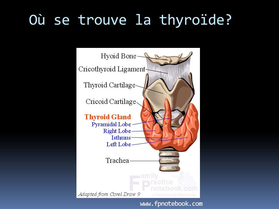 Où se trouve la thyroïde? www.fpnotebook.com