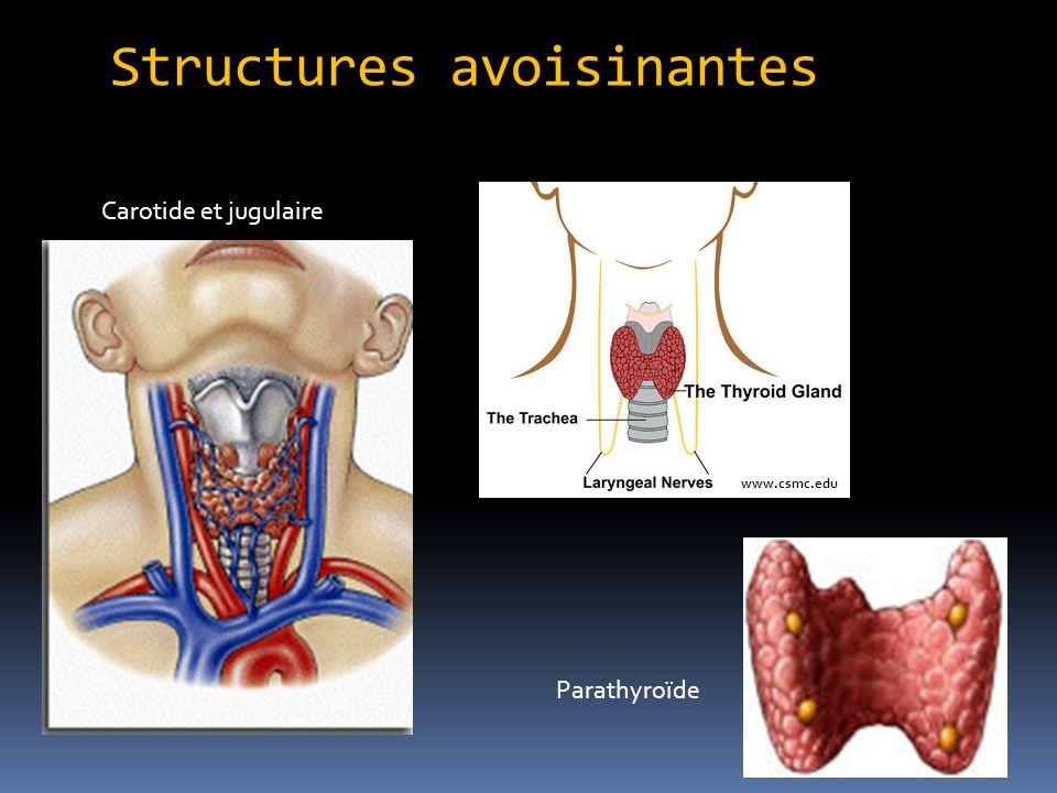 Structures avoisinantes www.csmc.edu Carotide et jugulaire Parathyroïde