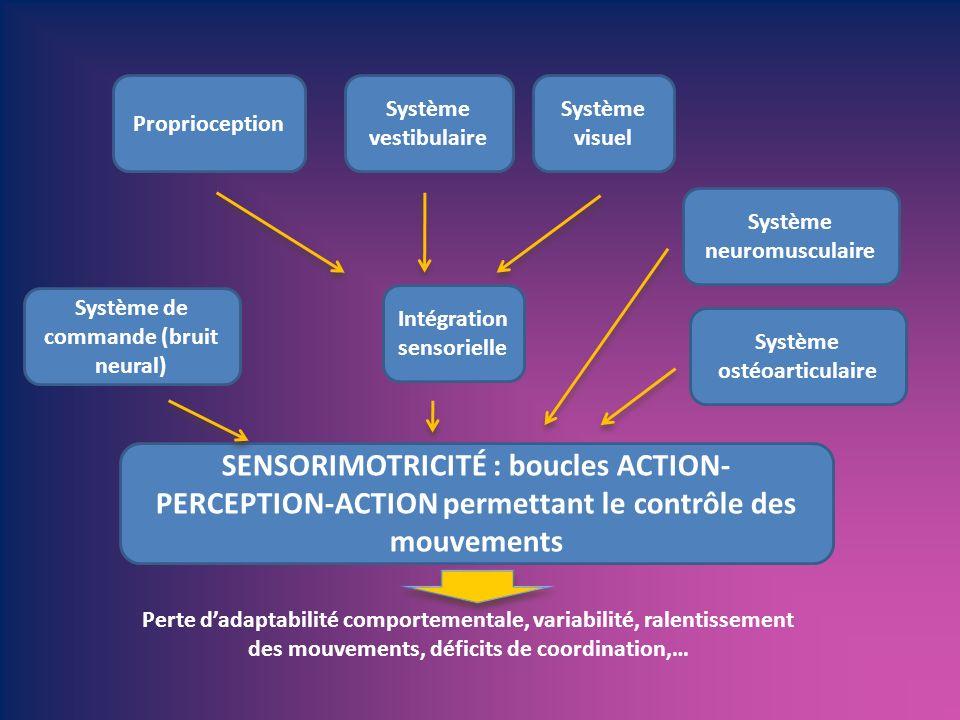 SENSORIMOTRICITÉ : boucles ACTION- PERCEPTION-ACTION permettant le contrôle des mouvements Proprioception Système vestibulaire Système visuel Intégrat