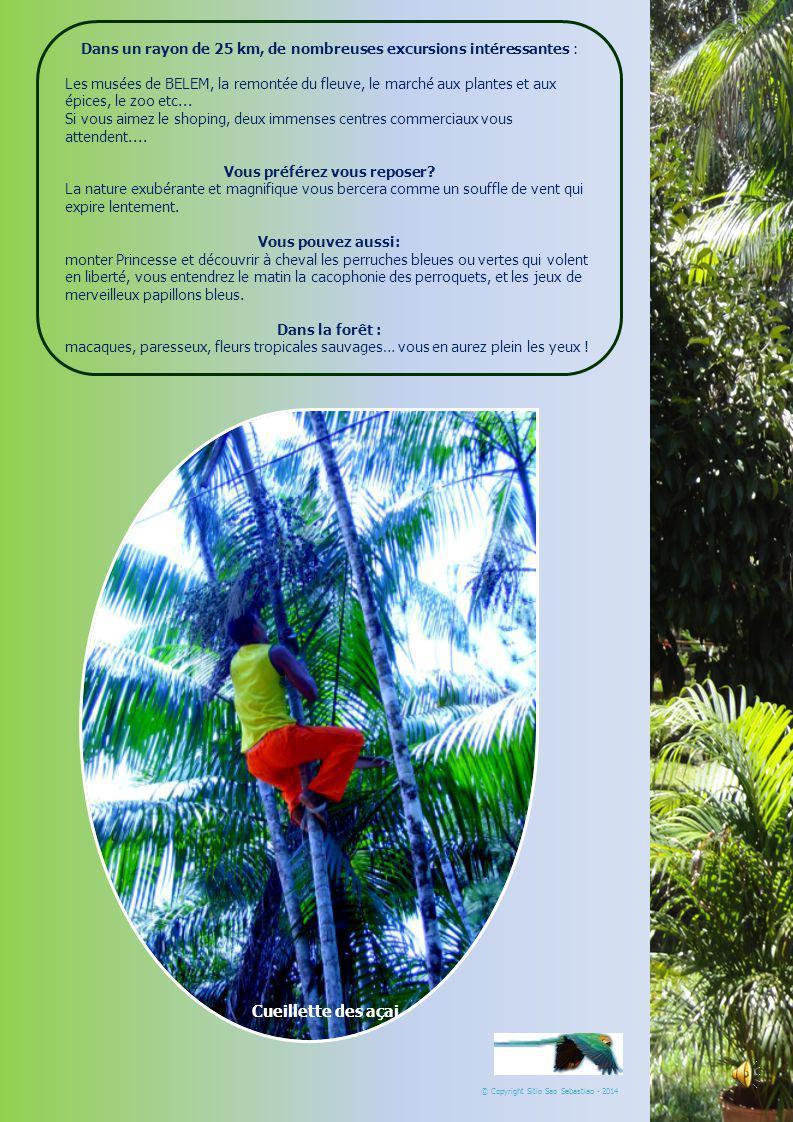 SÍTIO SÃO SEBASTIÃO :0055 91 37 24 15 82/37 24 37 66 :sitiosaosebastiaocs@yahoo.com.br BELÉM PARÁ BRESIL Idéal jeunes séniors © Copyright Sitio Sao Sebastiao - 2014