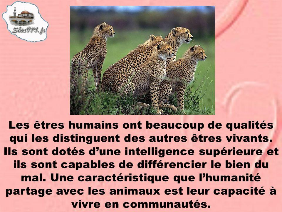 Les êtres humains ont beaucoup de qualités qui les distinguent des autres êtres vivants. Ils sont dotés dune intelligence supérieure et ils sont capab