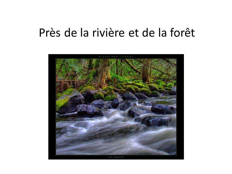 Près de la rivière et de la forêt
