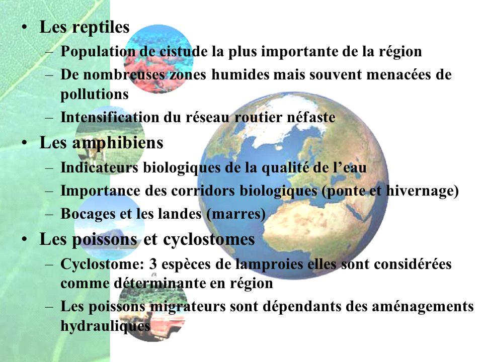 Les reptiles –Population de cistude la plus importante de la région –De nombreuses zones humides mais souvent menacées de pollutions –Intensification