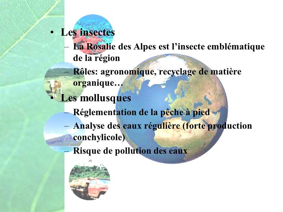 Les insectes –La Rosalie des Alpes est linsecte emblématique de la région –Rôles: agronomique, recyclage de matière organique… Les mollusques –Régleme