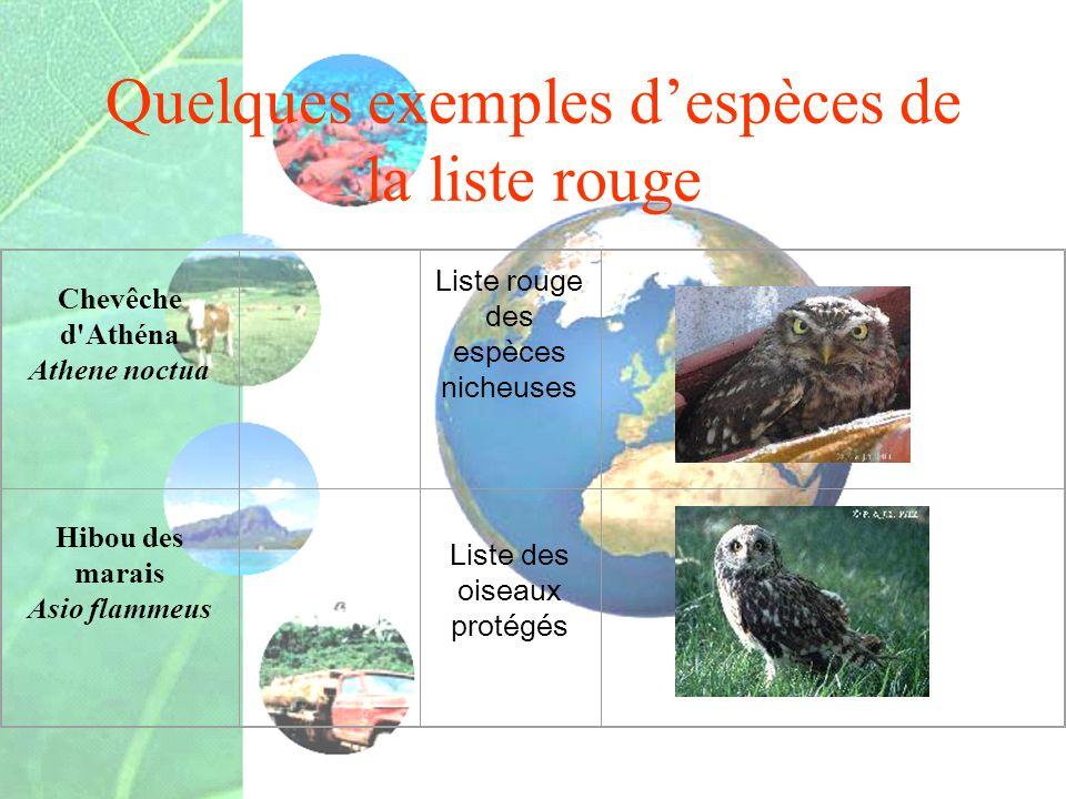 Quelques exemples despèces de la liste rouge Chevêche d'Athéna Athene noctua Liste rouge des espèces nicheuses Hibou des marais Asio flammeus Liste de