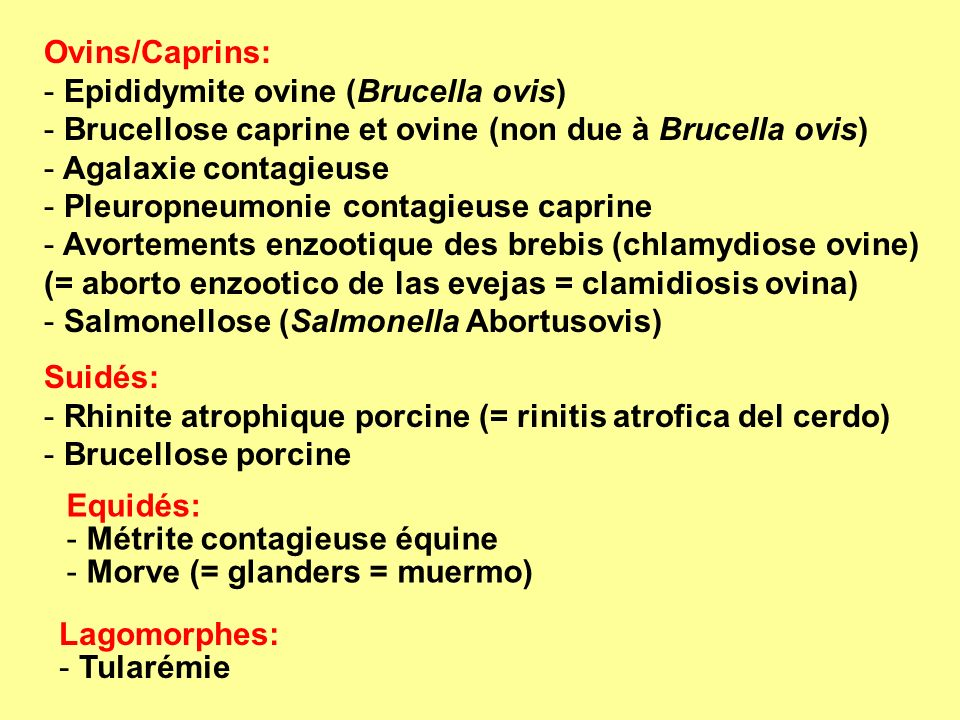 Oiseaux: - Tuberculose aviaire - Choléra aviaire (=fowl cholera) - Mycoplasmose aviaire (Mycoplasma gallisepticum) - Chlamydiose aviaire - Pullorose Poissons: - Rénibactériose (Renibacterium salmoninarum) (= Bacterial kidney disease) - Entérosepticémie du poisson-chat (Edwardsiella ictaluri) (= septicemia entérica del bagre) Abeilles: - Loque américaine (Paenibacillus larvae) (= American foulbrood of honey bees) (= loque americana de las abejas meliferas) - Loque européenne (Melissococus plutonius) (= European foulbrood of honey bees) (= loque europea de las abejas meliferas) Mollusques/Crustacés: pas de maladie bactérienne