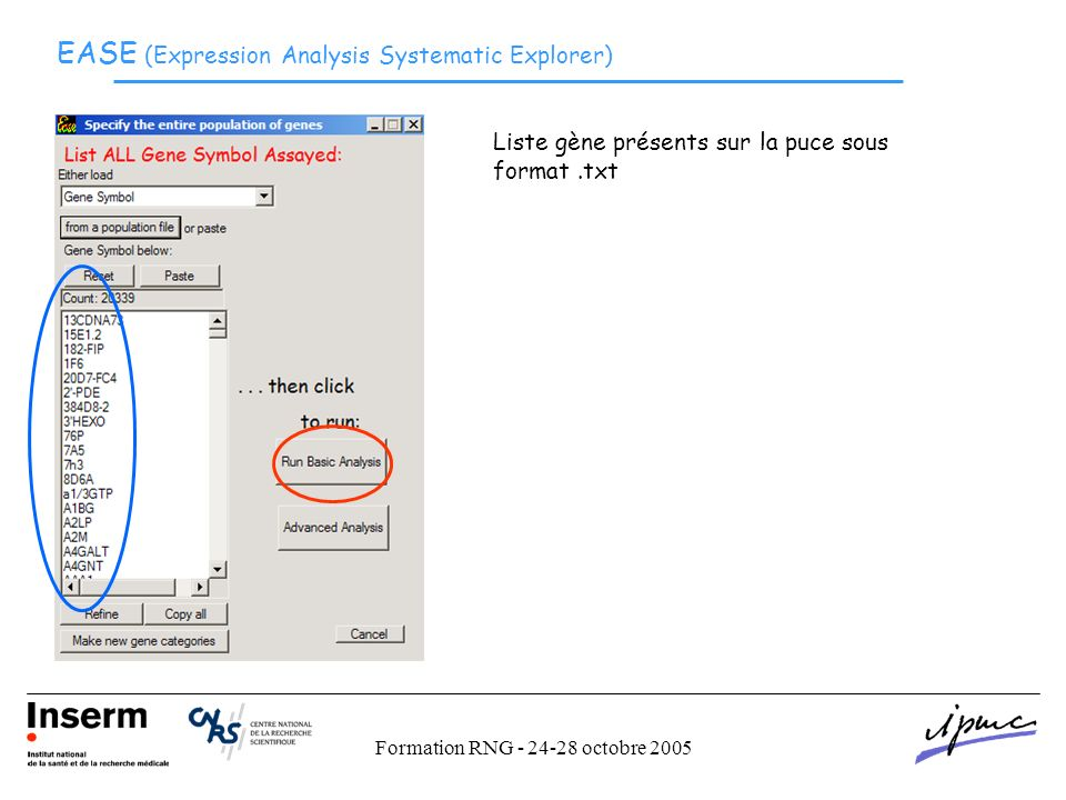 Formation RNG - 24-28 octobre 2005 EASE (Expression Analysis Systematic Explorer) Liste gène présents sur la puce sous format.txt