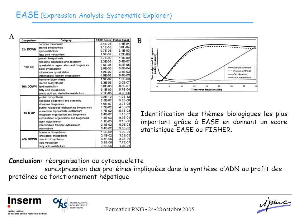 Formation RNG - 24-28 octobre 2005 EASE (Expression Analysis Systematic Explorer) Identification des thèmes biologiques les plus important grâce à EASE en donnant un score statistique EASE ou FISHER.