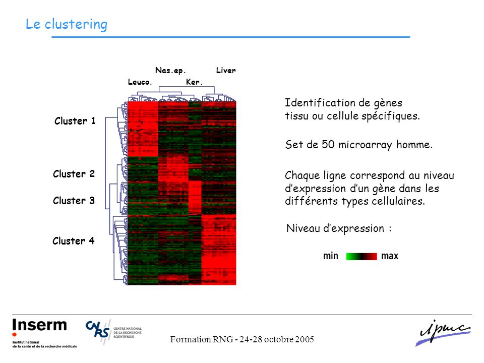 Formation RNG - 24-28 octobre 2005 Le clustering Set de 50 microarray homme.