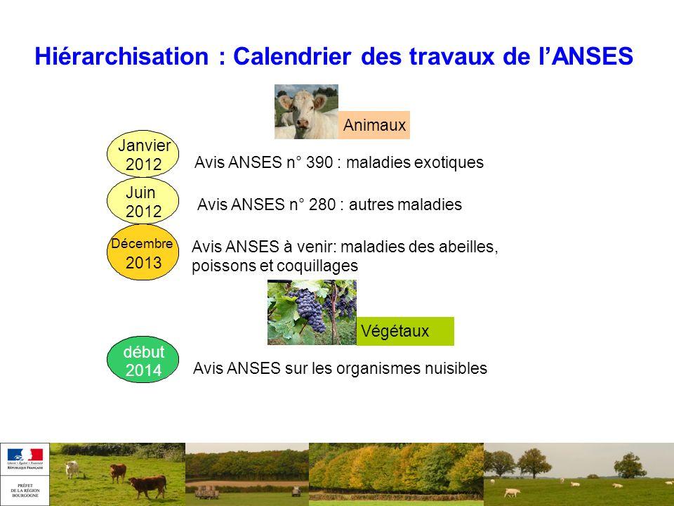 Hiérarchisation : Calendrier des travaux de lANSES Décembre 2013 Janvier 2012 Juin 2012 Avis ANSES n° 390 : maladies exotiques Animaux Avis ANSES n° 2